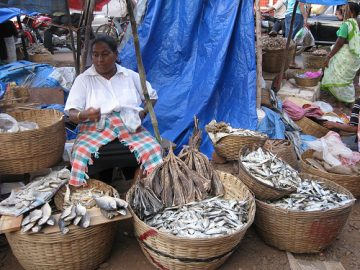 Ten per cent of world could face malnutrition as fish stocks tumble
