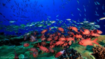Why some coral reefs thrive as others die off